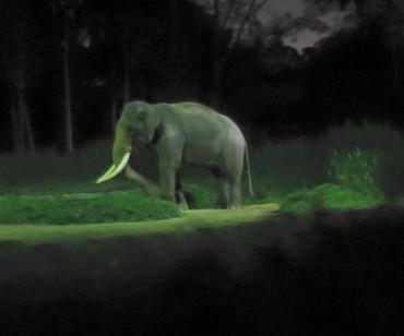 Night_safari3